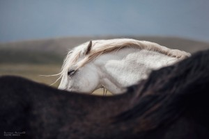 I-found-freedom-with-horses-576d2d3b572f8__880